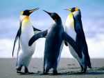 User:  Reddevil