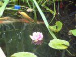 User:yybest81iz Name:DSCF0008.JPG Title:Gary R outside pond Views:444 Size: